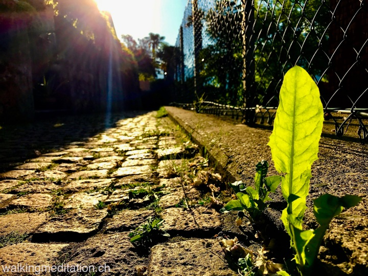 Choose an easy path – but not the easiest of themall